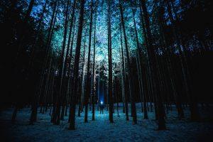 latarka w ciemnym lesie
